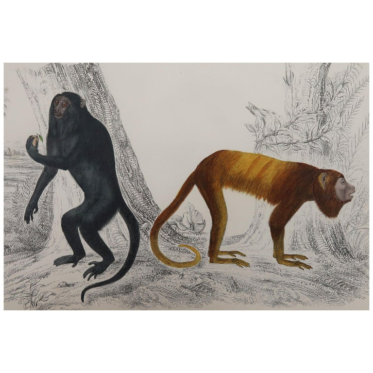 Original Antique Print of Monkeys, 1847 'Unframed' For Sale