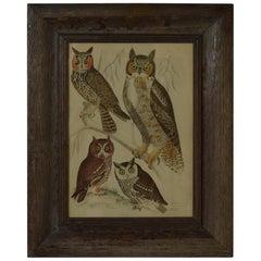 Original Antique Print of Owls, 1835