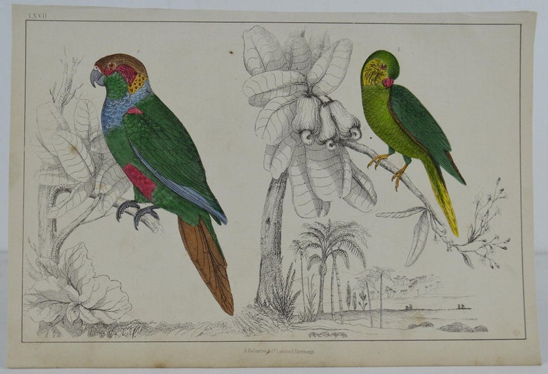 Great image of parrots