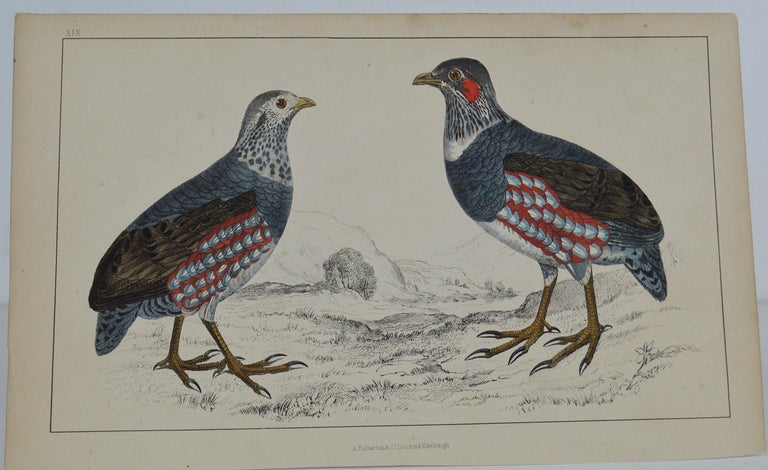 Great image of partridge