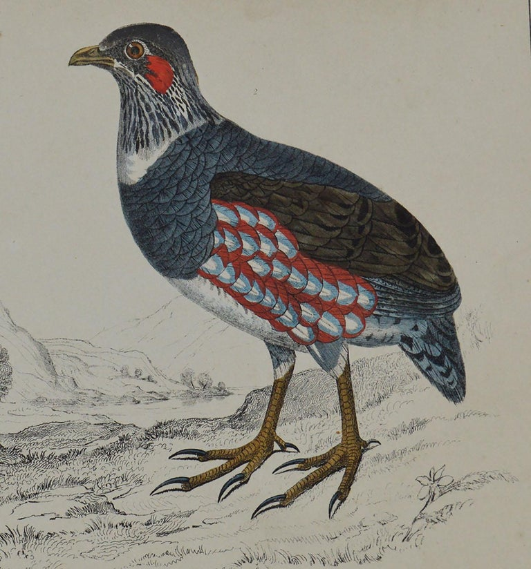 Folk Art Original Antique Print of Partridge, 1847 'Unframed' For Sale
