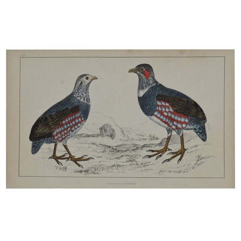 Original Antique Print of Partridge, 1847 'Unframed' For Sale