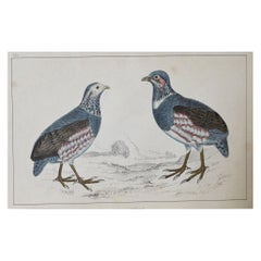 Original Antique Print of Partridge, 1847 'Unframed'