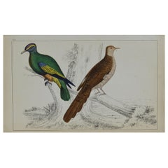 Original Antique Print of Pigeons, 1847 'Unframed'