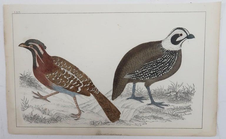 English Original Antique Print of Quail, 1847 'Unframed' For Sale