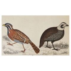 Original Antique Print of Quail, 1847 'Unframed'