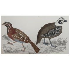 Original Antique Print of Quail, 1847 'Unframed'