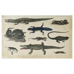 Original Antique Print of Reptiles, 1847 'Unframed'