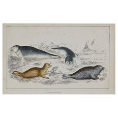 Original Antique Print of Seals, 1847 'Unframed'