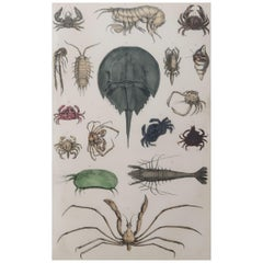 Original Antique Print of Shellfish, 1847 'Unframed'