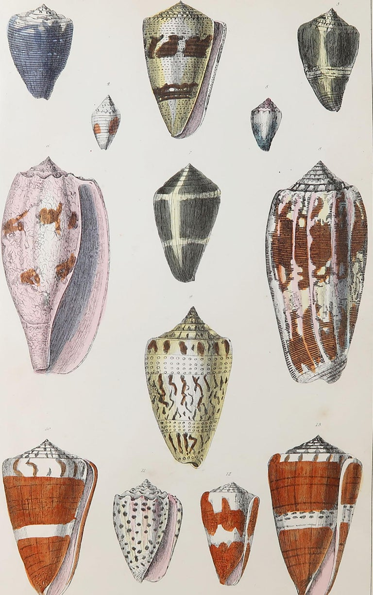 Great image of shells.  Unframed. It gives you the option of perhaps making a set up using your own choice of frames.  Lithograph after Cpt. Brown with original hand color.  Published, 1847.  Free shipping.
