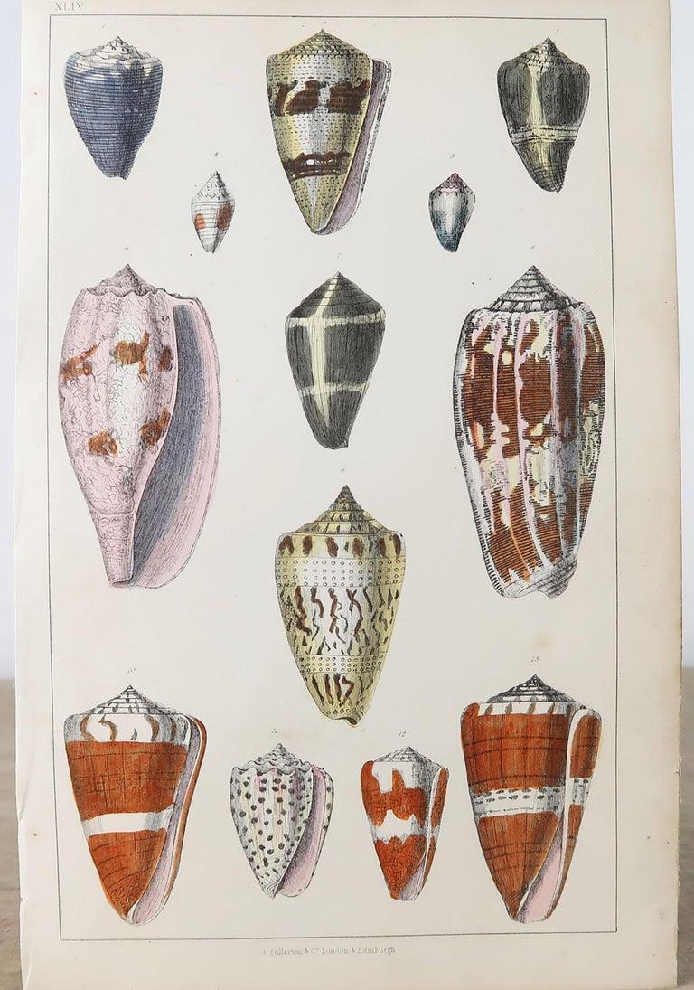 Folk Art Original Antique Print of Shells, 1847 'Unframed'