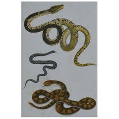 Original Antique Print of Snakes, 1847 'Unframed'