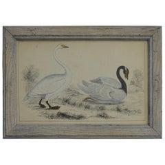 Original Antique Print of Swans, 1847