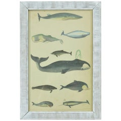 Original Antique Print of Whales and Dolphins, 1847