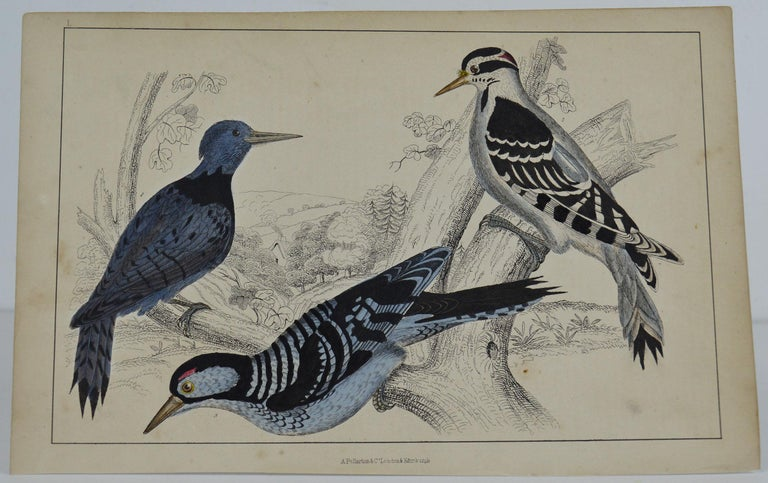 Great image of woodpeckers