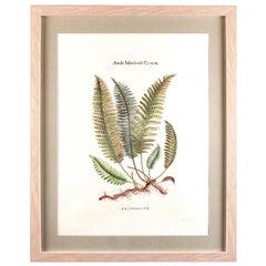 Original Custom Botanical Fern Prints with Makers Stamp