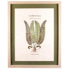 Original Vintage Botanical Fern Print with Maker's Stamp