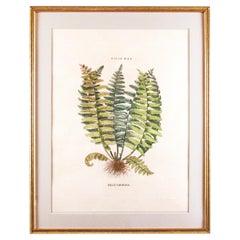 Original Vintage Custom Botanical Fern Prints with Makers Stamp