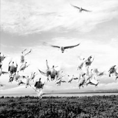 Bird Dance, Black and white nature photo of wildlife by river. Silver print