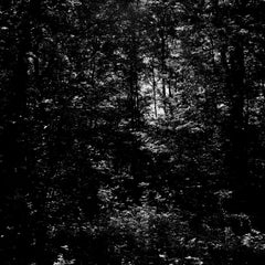 Abstract Forest Landscape, contemporary nature photography, black and white