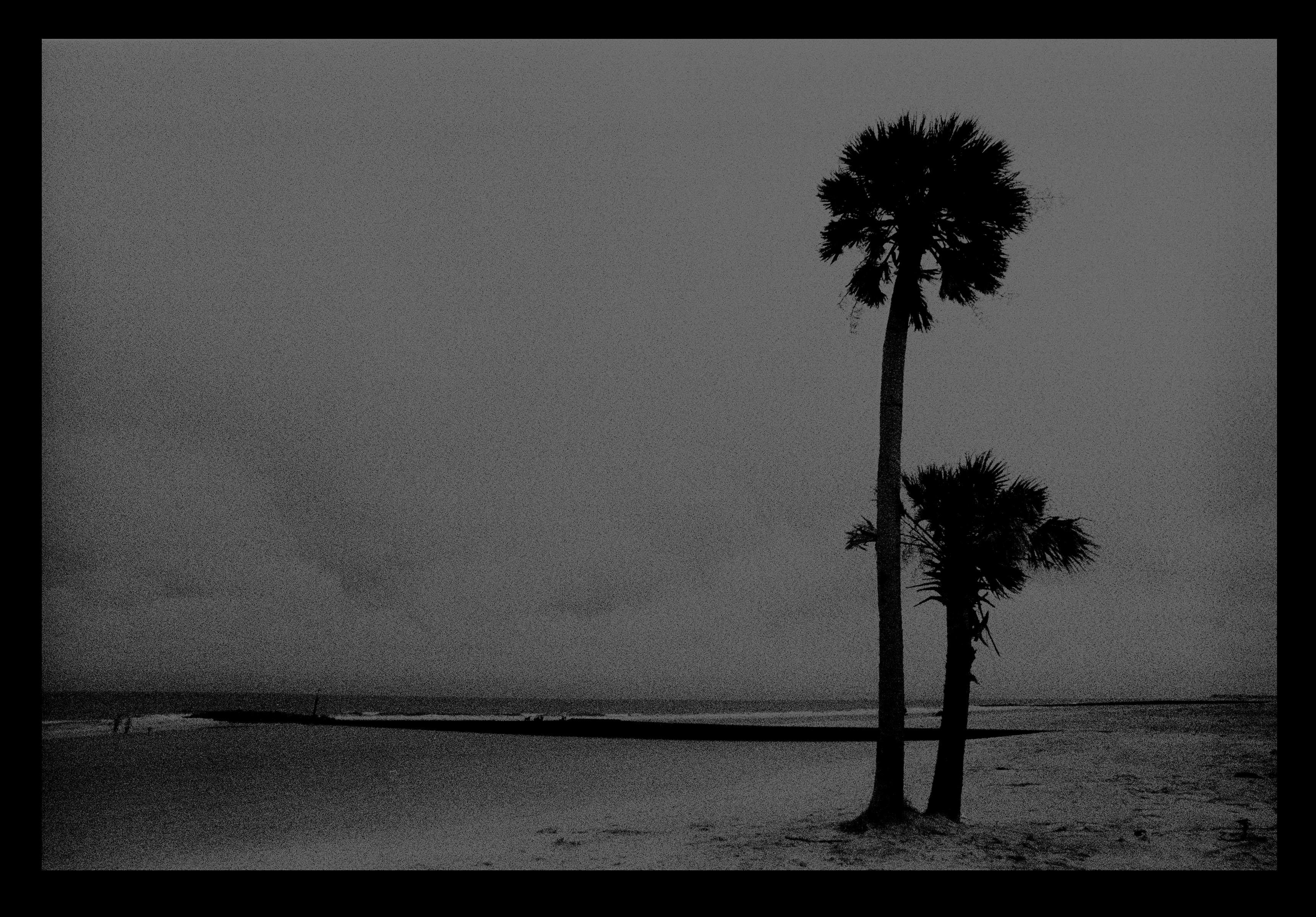 Night Palms, South Carolina, silhouette palms trees, beach, waves, ocean