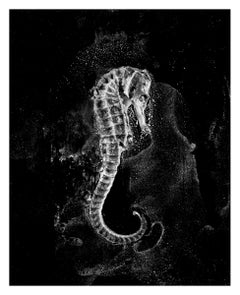 Sleep, contemporary black and white photograph, abstract seahorse, ocean, water