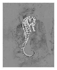 Sleep, Solarized silver gelatin print, seahorse, underwater, ocean, still life