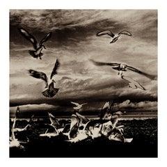 Solarized Flock, black and white wildlife nature photo of birds, silver gelatin