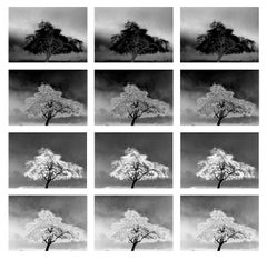 Spanish Banks, Vancouver, landscape photo grid of trees on the beach, nature