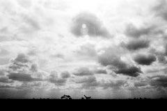 Sunset with Giraffe, Nairobi, Kenya, African landscape, clouds, silhouette