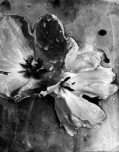 Tulip I, Abstract black and white still life photo, flowers, limited edition