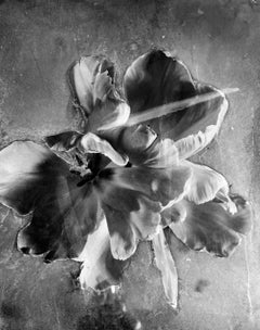 Tulip II - Abstract black and white still life photo, flowers, limited edition
