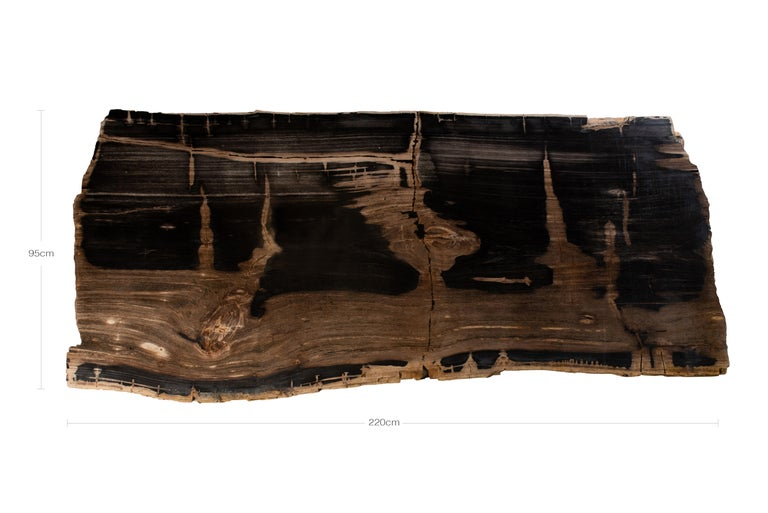 Organic Modern Oversized Live Edge Single Slab Petrified Wood Table Top  For Sale