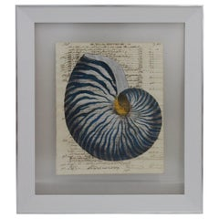 Painting of Blue Nautilus on 18th Century Manuscript Paper