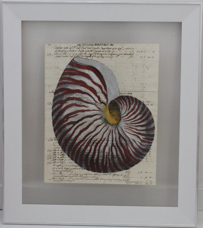 Hand painting of Red Nautilus on circa 1719 manuscript paper framed with reversing view from a Palm Beach estate.