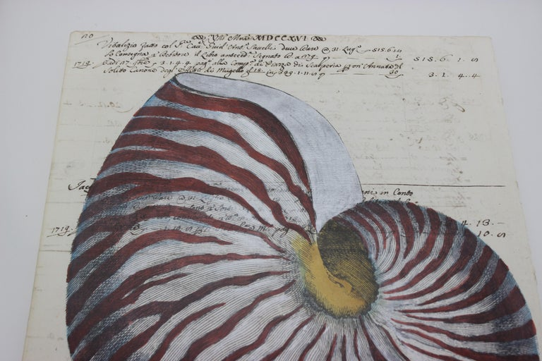 Brushed Painting of Red Nautilus on Manuscript Paper For Sale