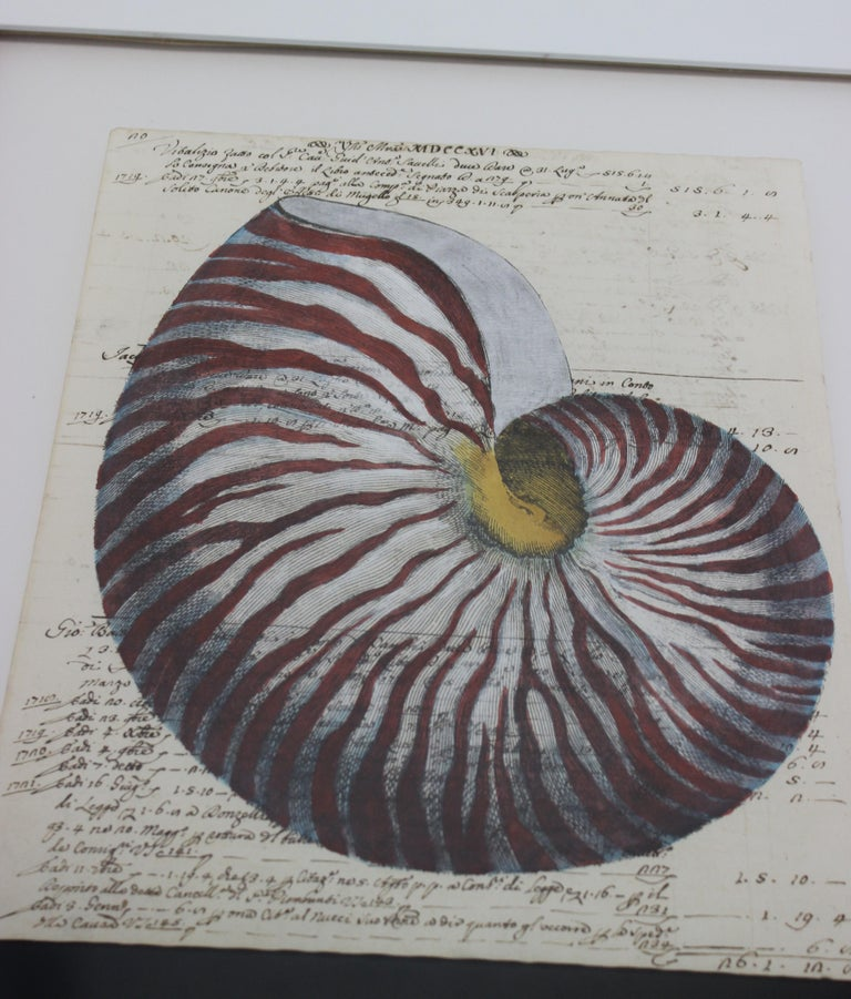 Painting of Red Nautilus on Manuscript Paper In Good Condition For Sale In West Palm Beach, FL