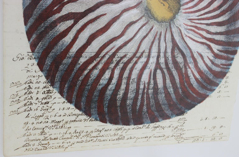 Painting of Red Nautilus on Manuscript Paper For Sale 1