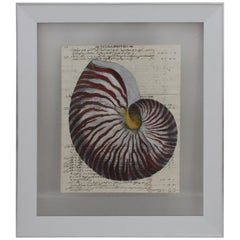 Painting of Red Nautilus on Manuscript Paper