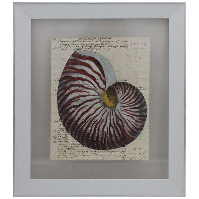 Painting of Red Nautilus on Manuscript Paper For Sale