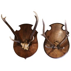Pair 19th Century French Mounted Deer Antler Trophies on Carved Walnut Plaques