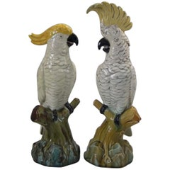 Pair of Edwardian Mintons Majolica Parrots or Cockatoos