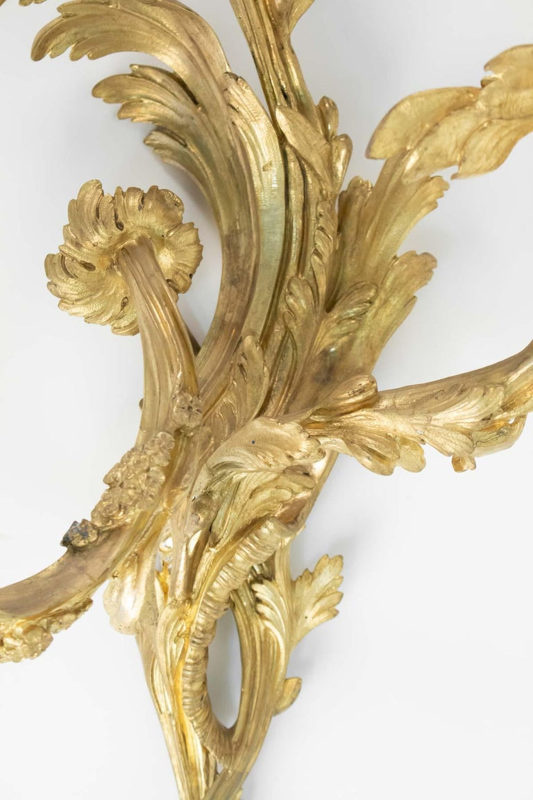 Pair of Gilt Bronze Sconces from the 19th Century in Louis XV Style For Sale 1