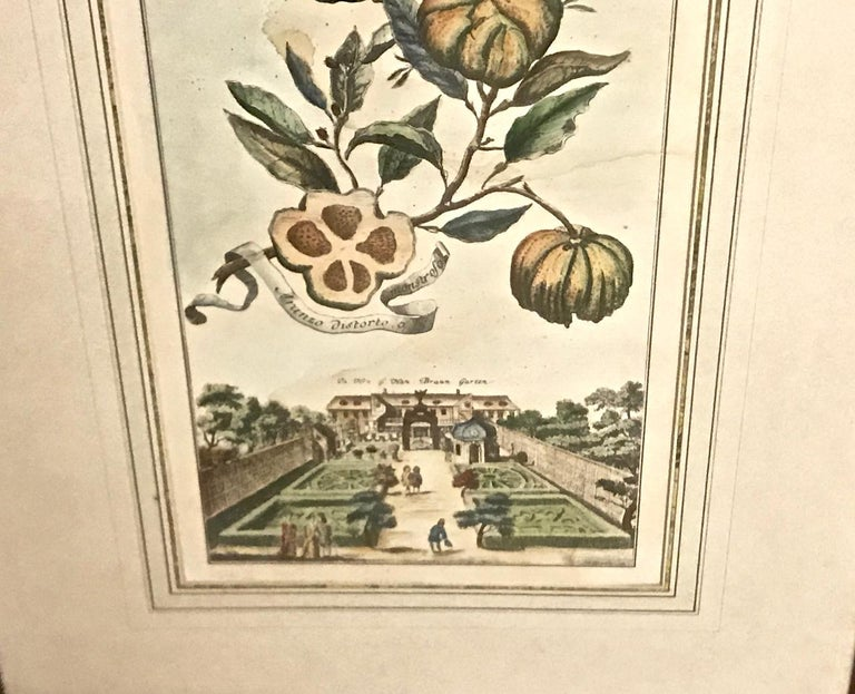 Pair of J. C. Volkamer Hand-Colored Botanical Engravings, circa 1708 In Fair Condition For Sale In Pasadena, CA