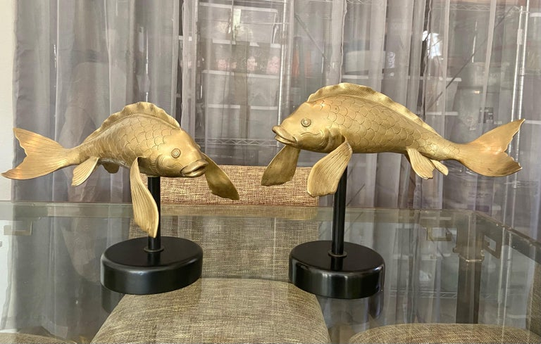 Pair of large Asian heavy cast brass koi fish sculptors newly mounted on black lacquered wood and metal bases. Each fish is finely crafted and sightly different in size. The bases are slightly different in height giving the impression they are