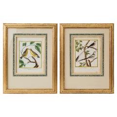 Pair of 18th Century Bird Prints/Engravings by Martinet