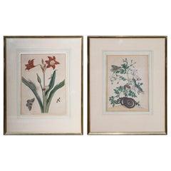 Pair of 18th Century Botanical Engravings, Maria Sibylla Merian