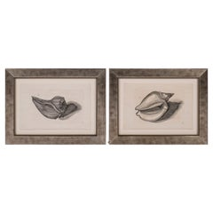 Pair of 18th Century Engravings by Lister