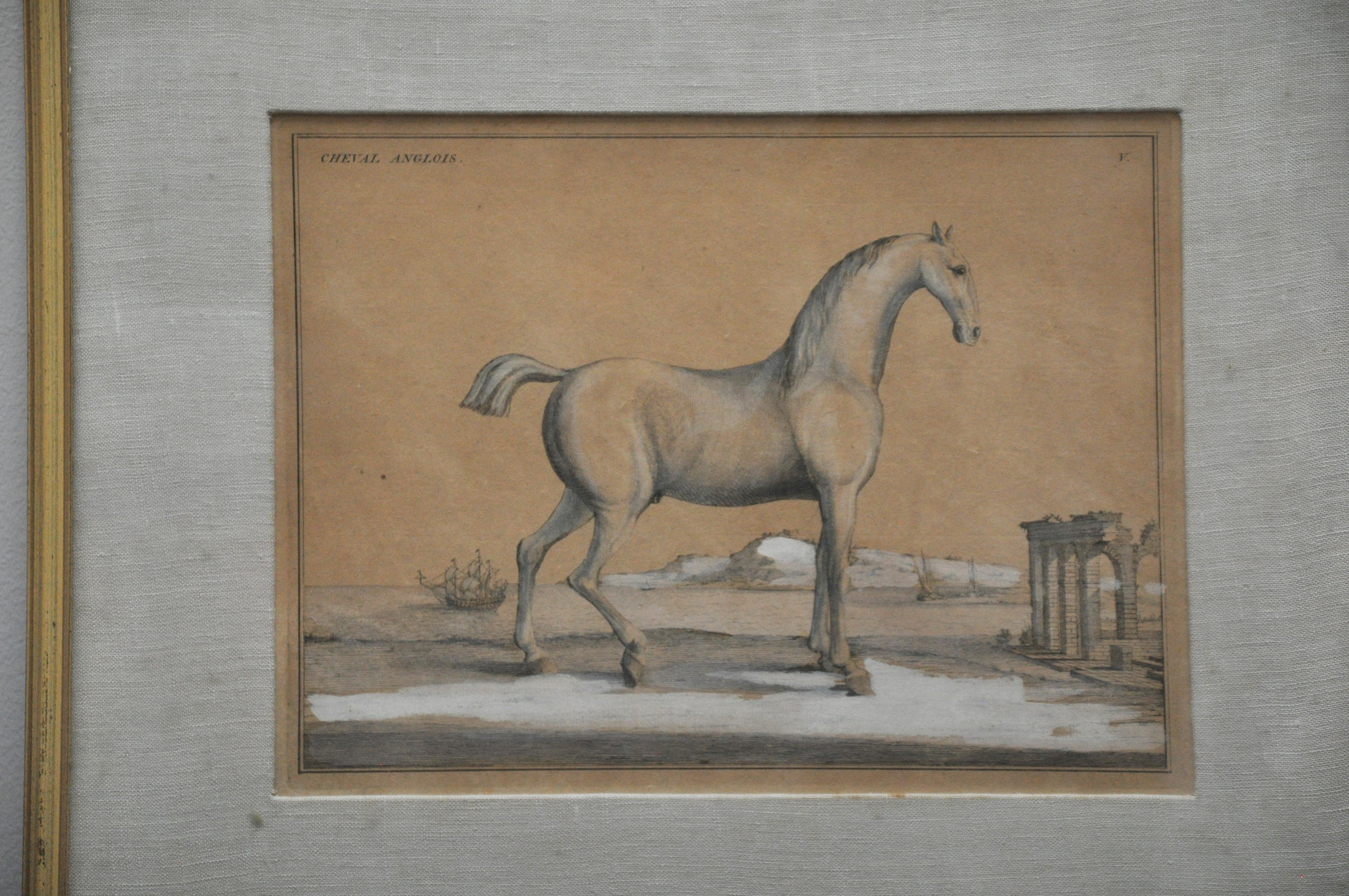 Anglois 18th century etchings of le neopoltain and cheval anglois horses - set of 2